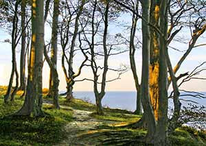 Naturbestattungen haben im Begräbniswald Freden opn Kliff eine lange Tradition ebenso wie das Gut Friederikenhof und einst dazugehörige Schloss Weißenhaus
