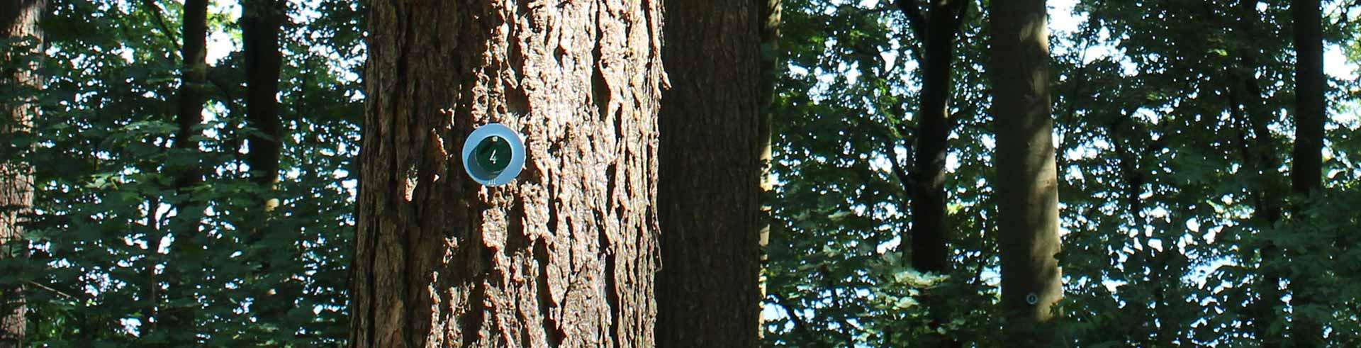 Ob im Friedwald, Ruheforst, Küstenfrieden, Waldfriedhof oder bei uns im Begräbniswald, wählen Sie einen Baum nach ihren individuellen Vorstellungen.