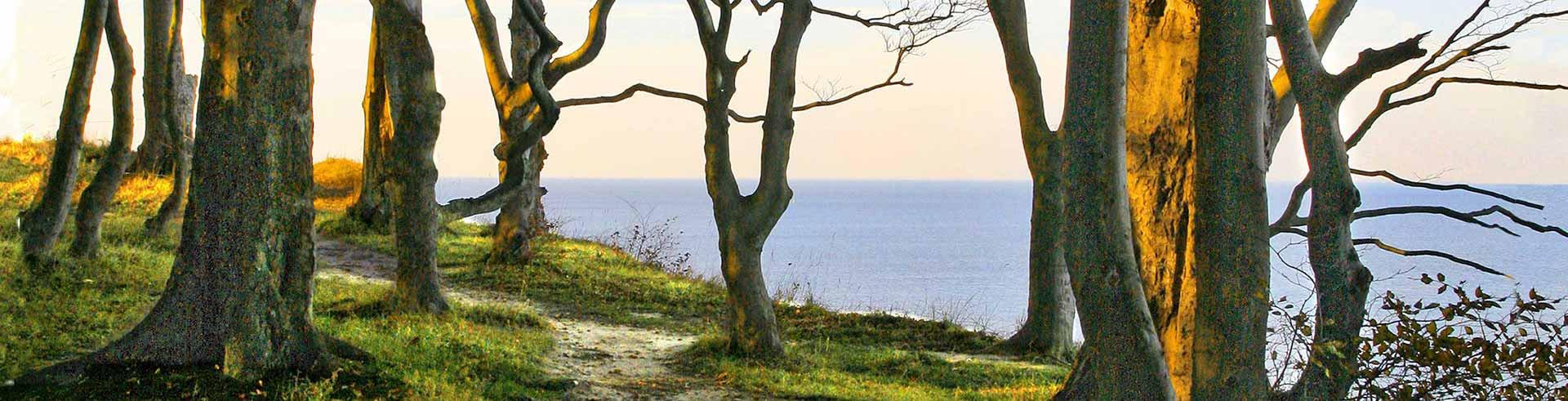 Im Friedwald, Ruheforst, Waldfriedhof oder unserem Begräbniswald direkt an der Ostsee gibt es verschiedene Grabarten zur Urnenbestattung.