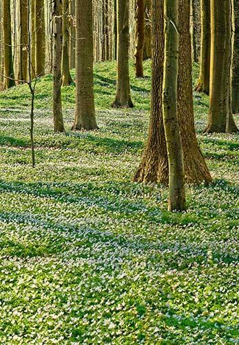 Die Unterirdischen leben in Hügelgräbern eine Sage rund um den Begräbniswald am Eitz in Schleswig-Holstein