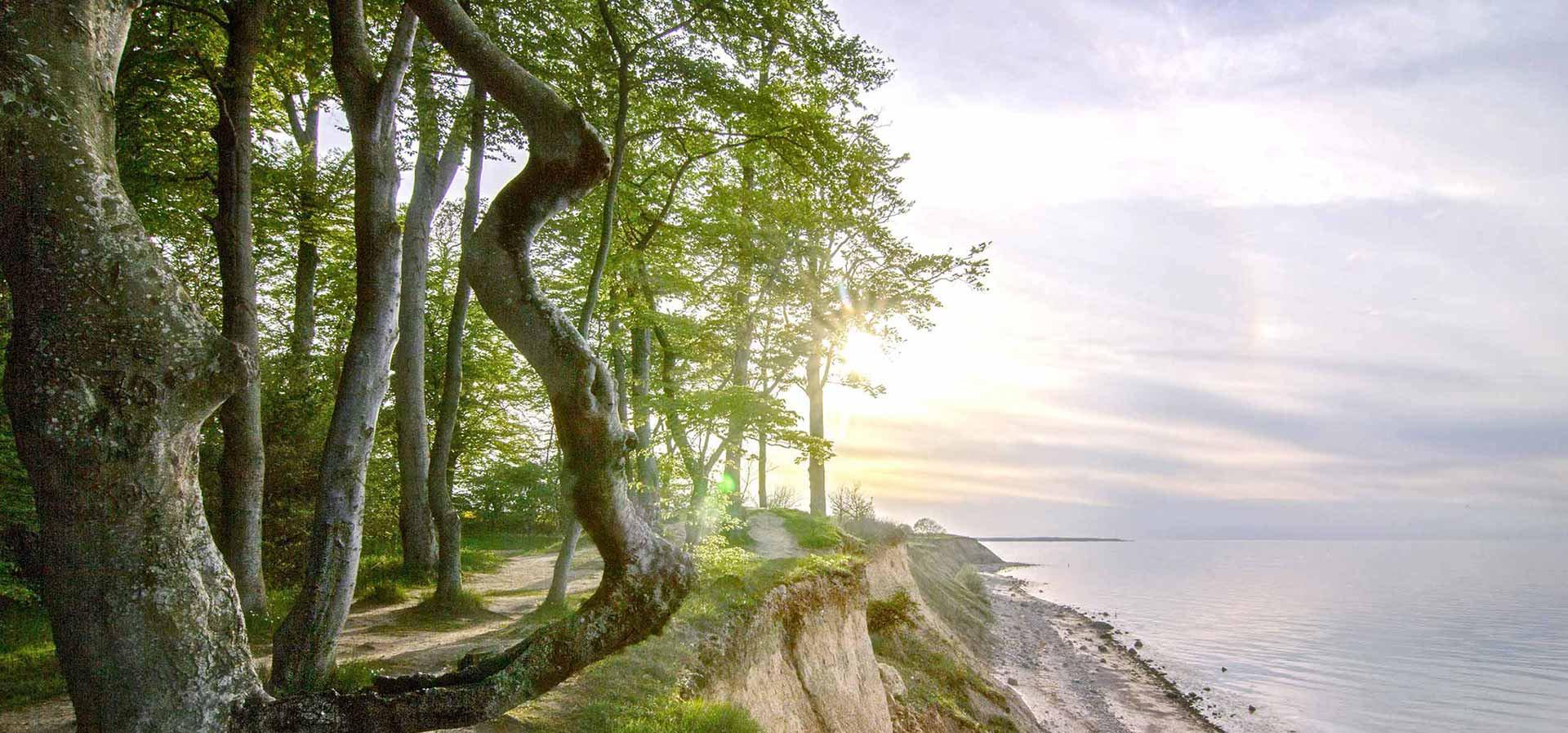 Ein Ort wie kein anderer- Eine Grabstätte inmitten der Natur- Freden op`n Kliff- Beerdigung in der Schönheit der Natur