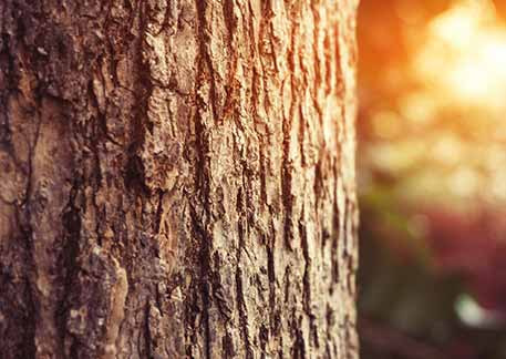 Für viele Menschen ist eine Baumbestattung eine gute alternative zu anderen Bestattungsformen wie z.B. Seebestattung oder anonyme Bestattung