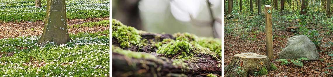 Eine Grabstätte im Wald- Die Baumgrabstätte ist auch ohne Grabpflege das ganze Jahr schön